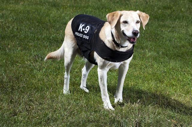 Canine Police Dog