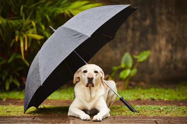 Dog In Rain