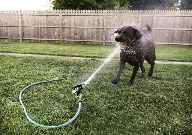 Dog With Sprinkler