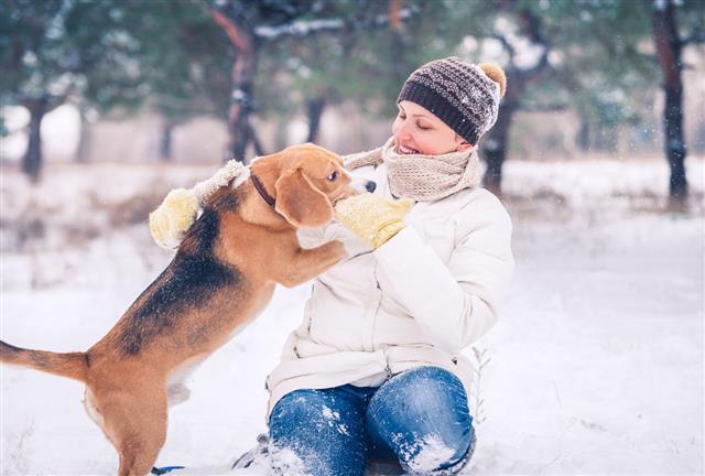 Walking With Pet