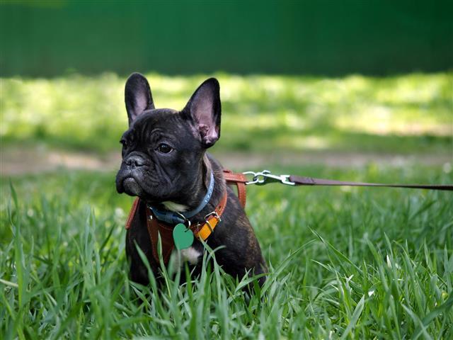 leash dog