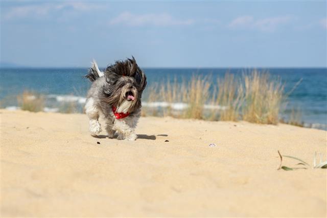 Happy Running Dog On The Beach