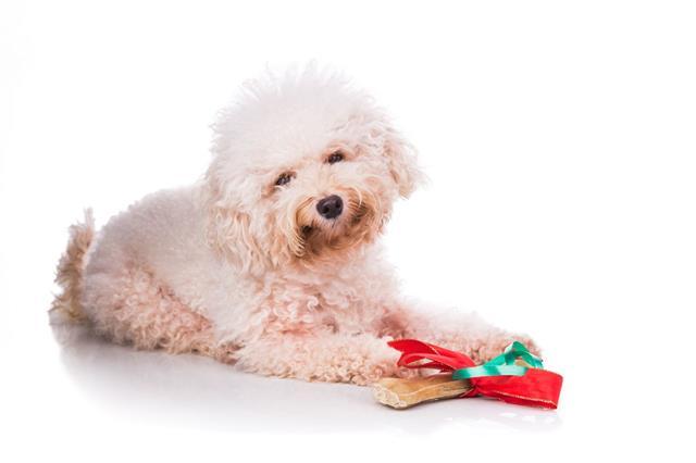Dog With Christmas Gift