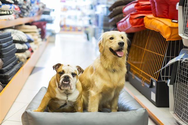 English Bulldog And Golden Retriever