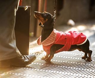 Little Cute Dog On Milan Street