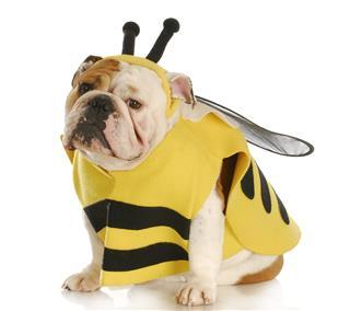Dog Dressed Up Like A Bee