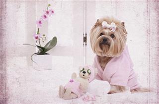 Yorkie Dog And Teddy Bear