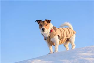Dog Hiking At Winter Mountains