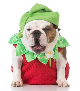 Dog Dressed Like A Strawberry