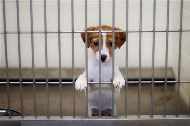 Dog Pound Puppy