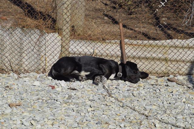 Black Dog Resting Under A Fence