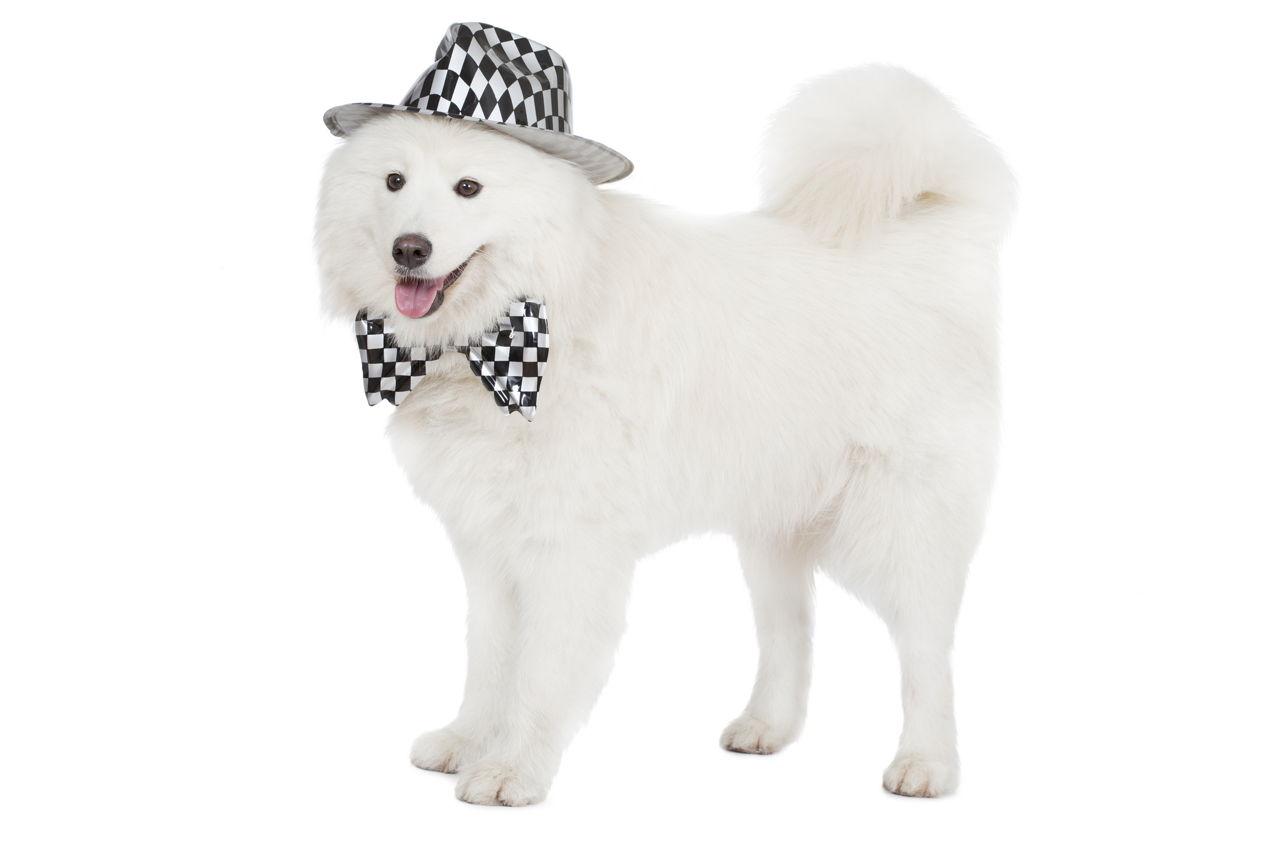 Cream Puff As A Dog Name