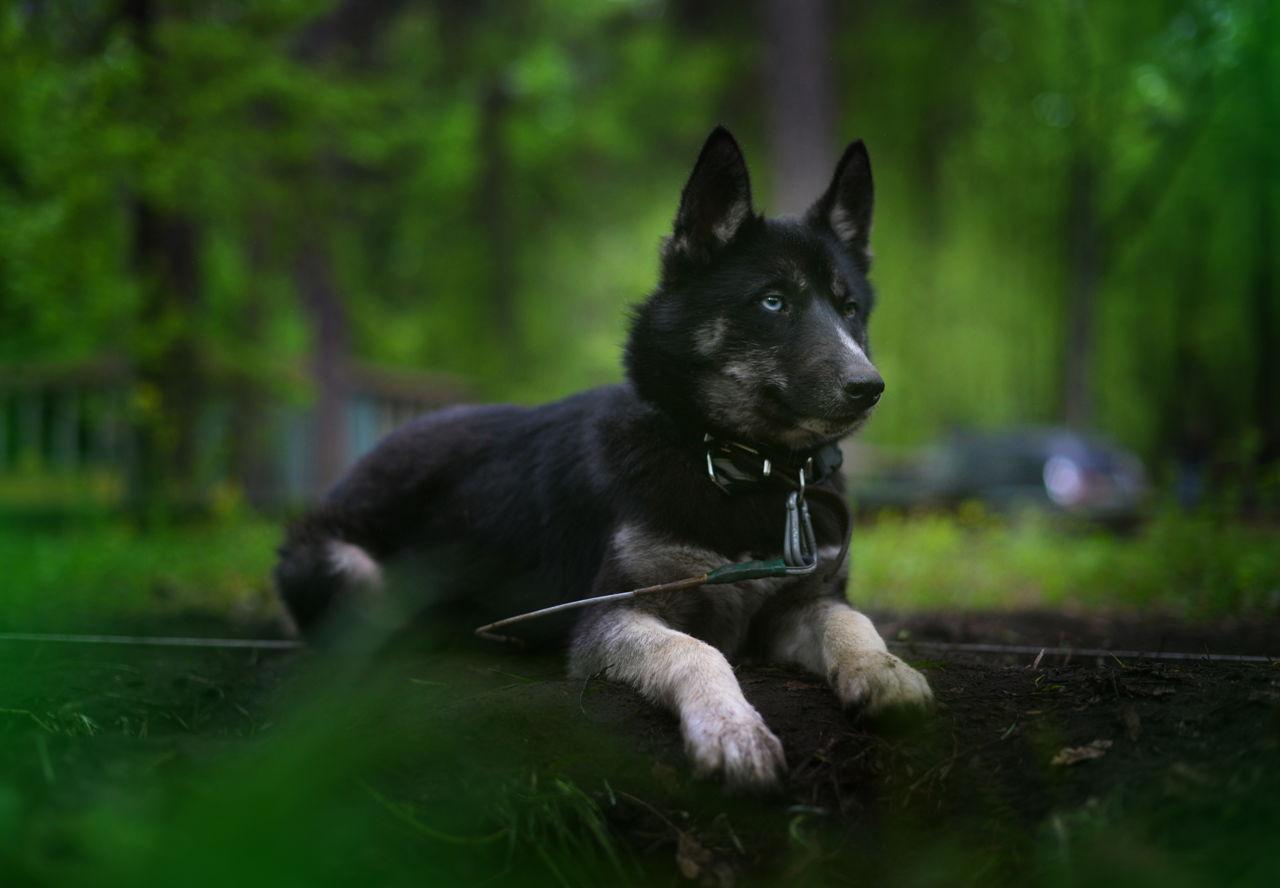 Identifying Dog Worms