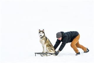 Man Rides A Dog On Sledge