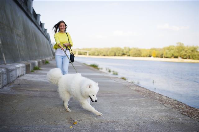 Girl And Samoyed Run Along The River