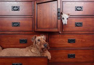 Dogs In Dresser