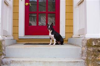Dog Sitting On A Porch