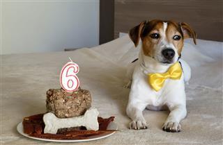 Dog Lying With Cake
