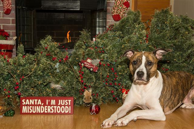 Dog Destroys Christmas