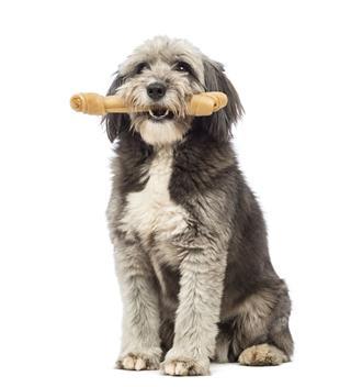 Dog Sitting And Holding A Bone