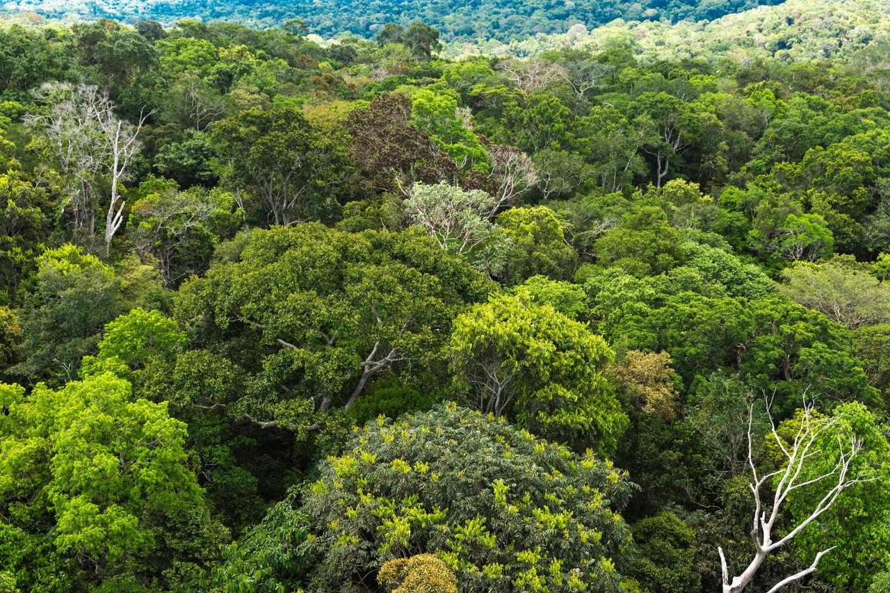 tropical rainforest biome vegetation