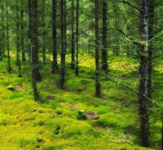 Woodland Nature