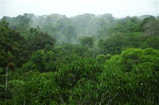 Amazon Canopy