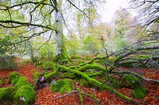 Jungle In Navarra Pyrenees Spain