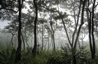 Dipterocarp Forest Thailand