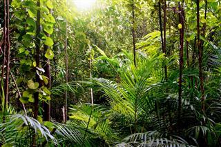 Jungle Background Krabi Thailand