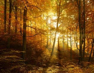 Autumn Forest Illuminated By Sunbeams