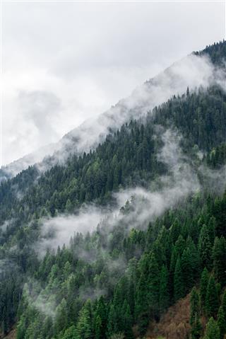 Foggy Mountainside In Kashmir