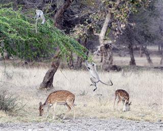 Symbiotic Animals In Ranthambore India