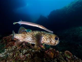 Fishes In Underwater