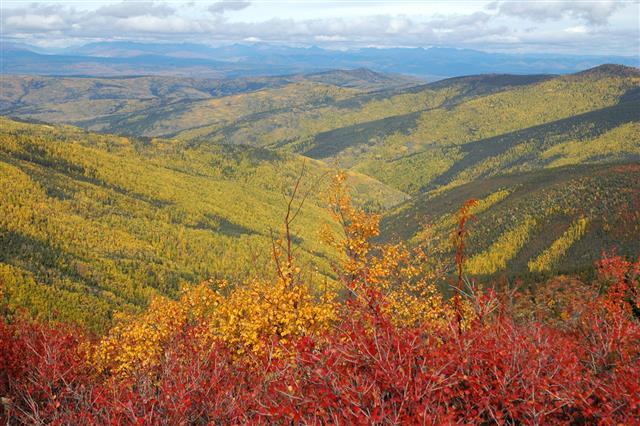 Yukon Scenery In Ogilvie Mountains