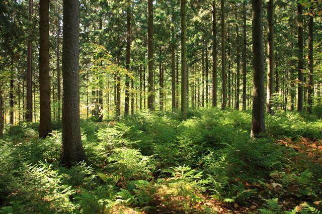 Sunlit Forest Interior