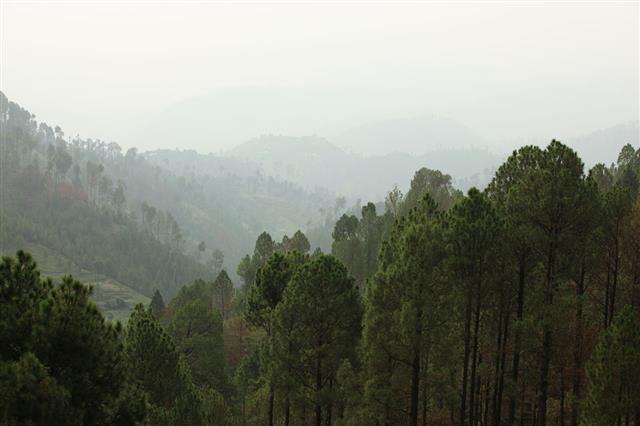Pine Forest Balakot