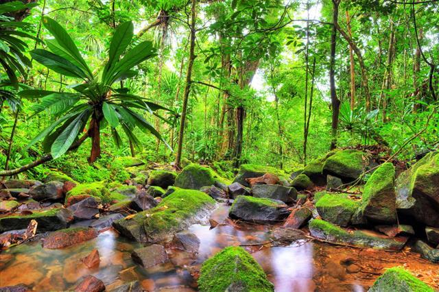 Masoala Green Jungle