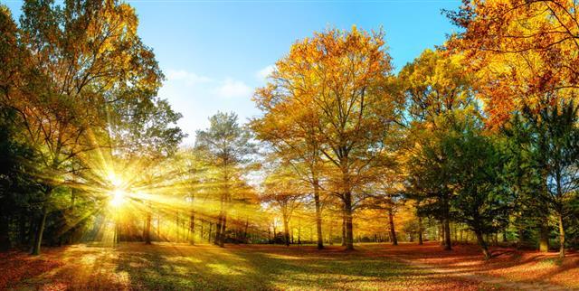 Sunny Autumn Scenery
