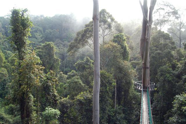 Danum Valley Canopy Walkway Borneo