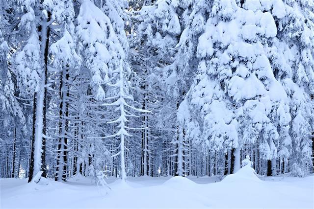 Wild Winter Low Temperature