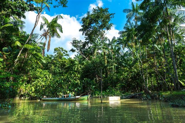 Wetlands In Belem Do Para Brazil