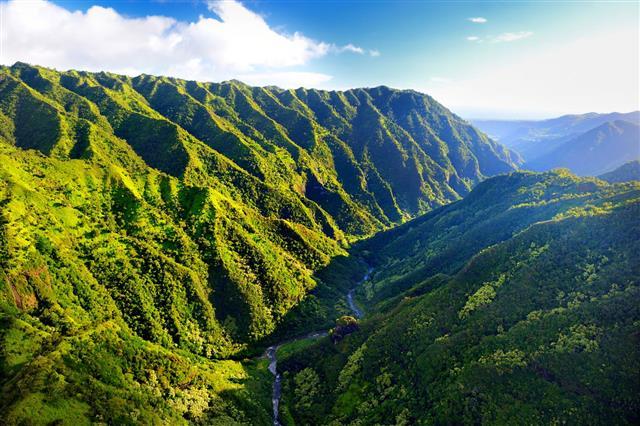 Spectacular Jungles Kauai