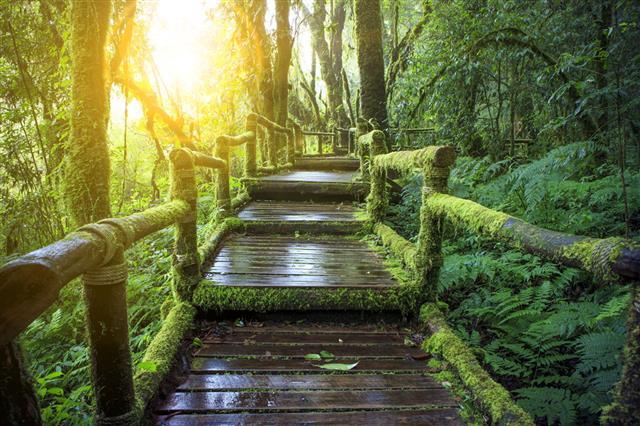 Moisture Of Mountain Rainforest