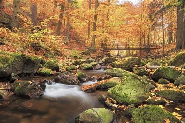 Bridge Over Stream In Forest