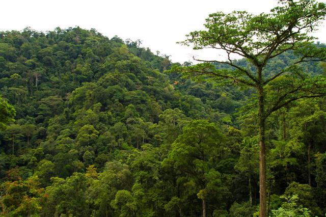 Sumatran Rain Forest