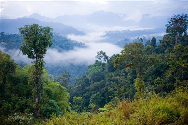 A View Over A Rainforest