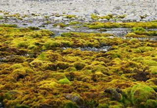 Green Moss Growing At Spitsbergen