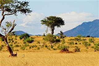 African Savannah Landscape