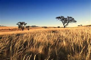 Grassland Landscape Africa